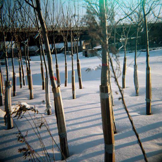 Parc d'arbres/ Ville de Montréal, 2009 / Annie-Ève Dumontier