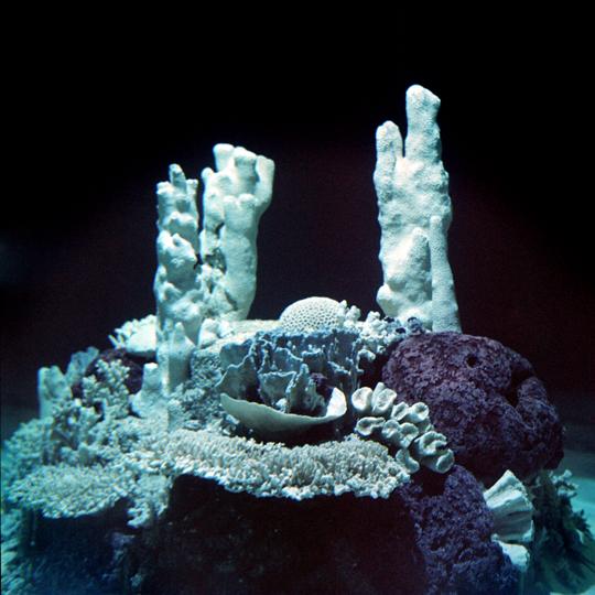 Aquarium / Granby, p.Q  2011 / Annie-Ève Dumontier