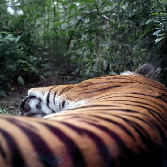 Zoo de Granby/ Granby,p.Q  2011 / Annie-Ève Dumontier